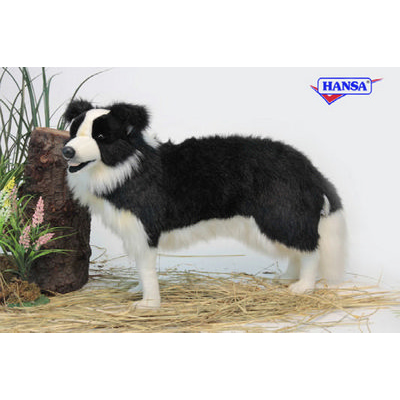 Shadow the Border Collie by Hansa