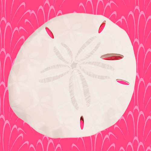 Sand Dollar on Punch by Oopsy daisy