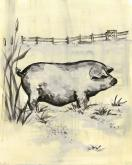 Toile Piggy, Cream & Black by Oopsy daisy