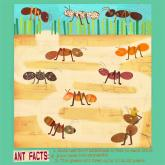 Ants by Oopsy daisy