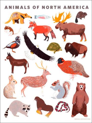 Animals of North America by Oopsy daisy