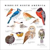 Birds of North America by Oopsy daisy