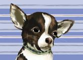 Ace the Chihuahua by Oopsy daisy